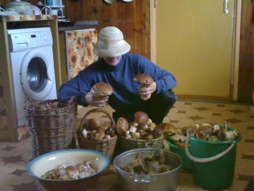 Грибочки 2011 | Лукошко грибов