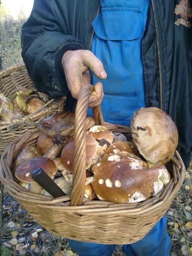 Грибочки 2011_4 | Лукошко грибов