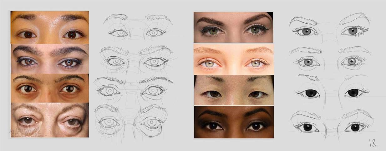 anatomy_eyes_01 | Анатомия и дизайн персонажей(18+)