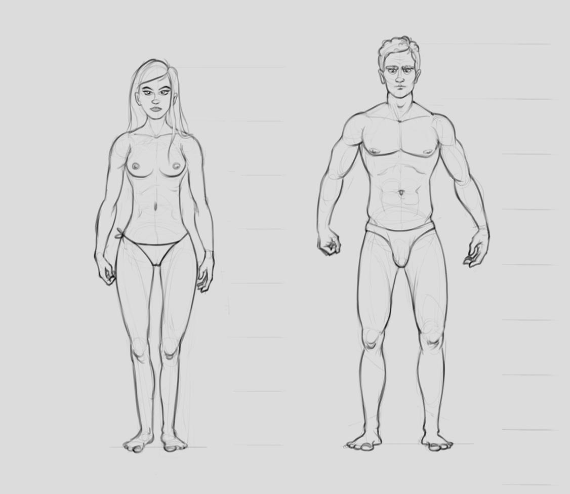 anatomy_test | Состоялся релиз трехмерного WebGL движка Blend4Web