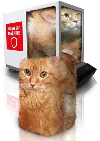 cat4 | Шар свиборга