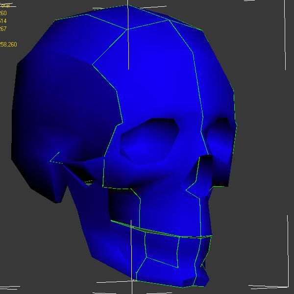 череп швы | Череп