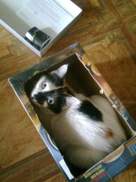Кошка | Кототред