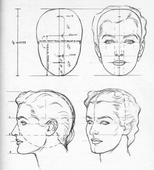 Пропорции головы | Пропорциональность человеческой фигуры. Моделирование головы человека.