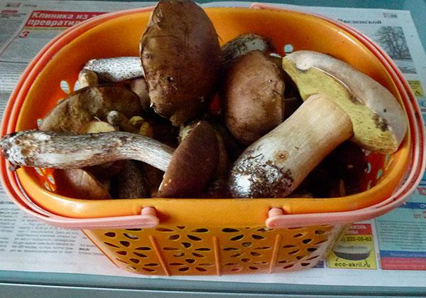 грибы | Лукошко грибов