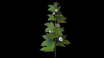 foliage_r1_s