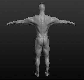 Модель мужчины, вид сзади