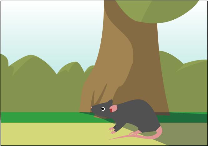 rat | Конкурс: Шаг за Шагом [Сдача работ до 15 декабря 2018]