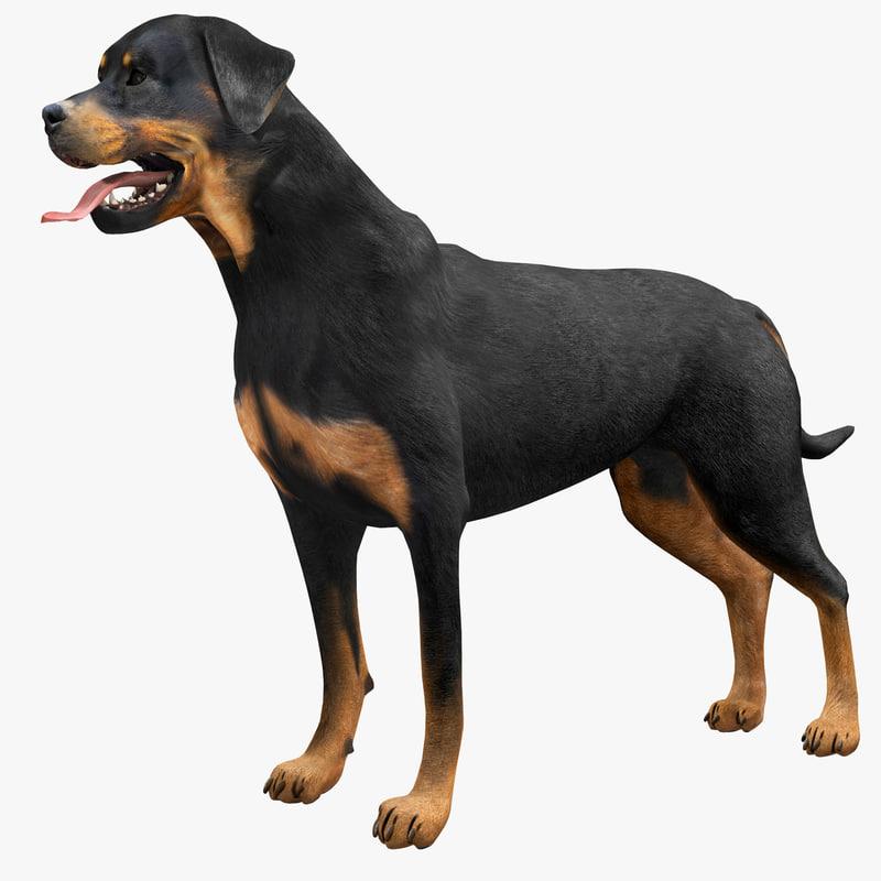 dog | Создать модели животных 3д