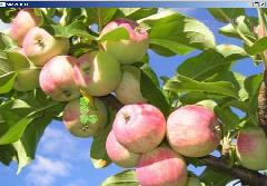 find apple