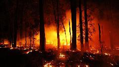 Австралийские разработчики игр предложили свою помощь в тушении пожаров.