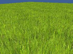 CFTG Grass randomized