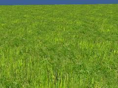 CFTG Grass 2 types