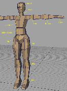Настройка скелета модели человека в Maya.