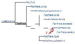 pantherinae