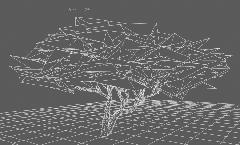 RedMaple_Grid