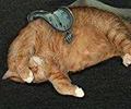 Anna  (badfatcat)